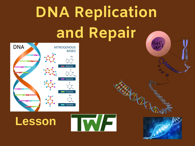DNA Replication and Repair Lesson