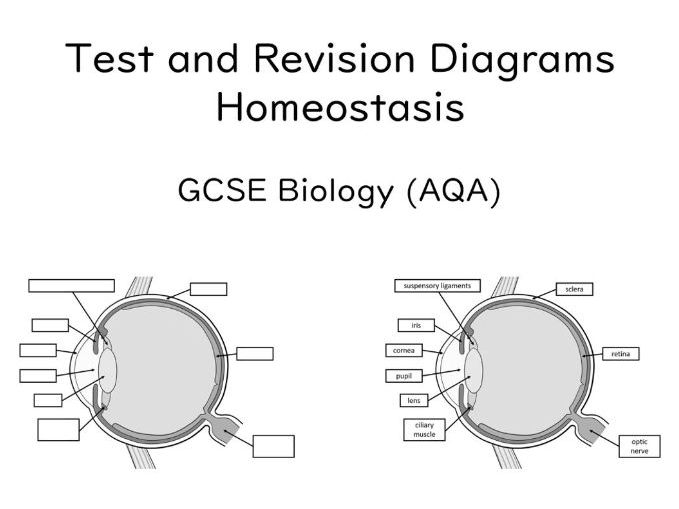 Diagrams Homeostasis Gcse Biology  Aqa