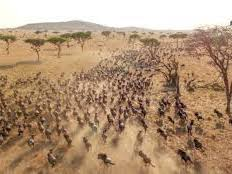 OCR A level Biology topic 6 Populations and Sustainability Masai Mara