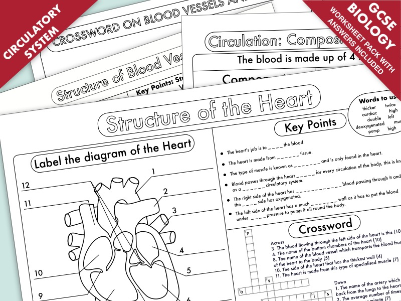 Biology GCSE Revision: Heart and Circulation  Worksheet Pack UPDATED