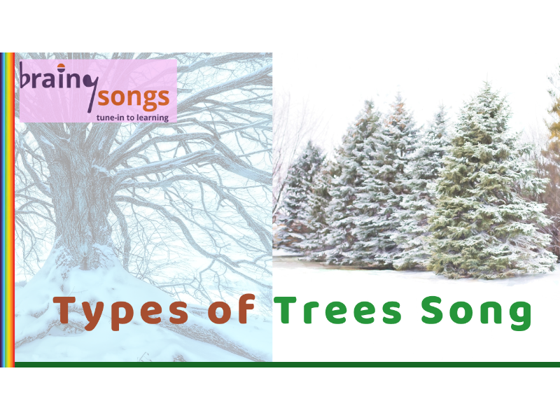 TYPES OF TREES (Deciduous & Evergreen) for Year 1