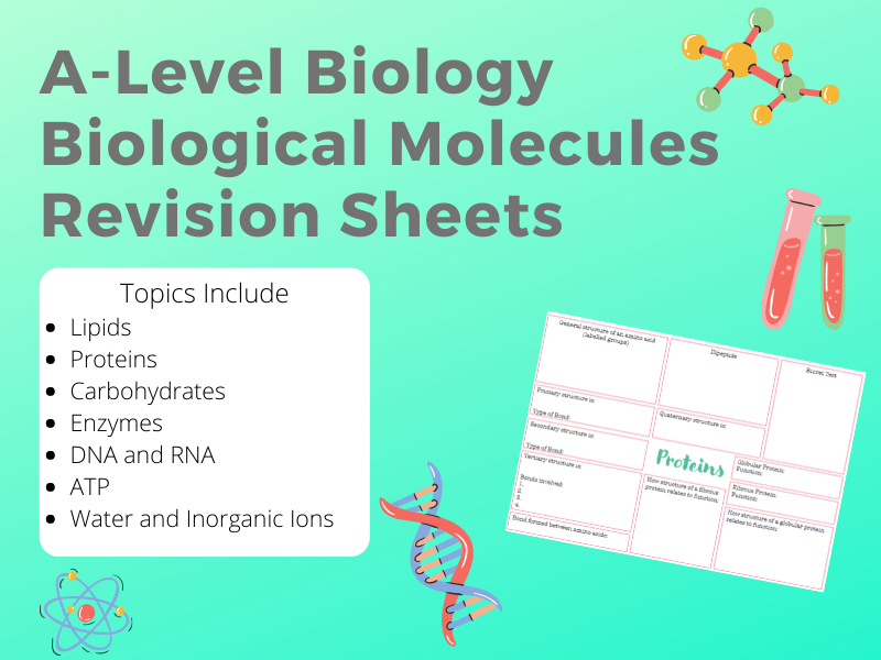 A-Level Biological Molecules Revision sheets
