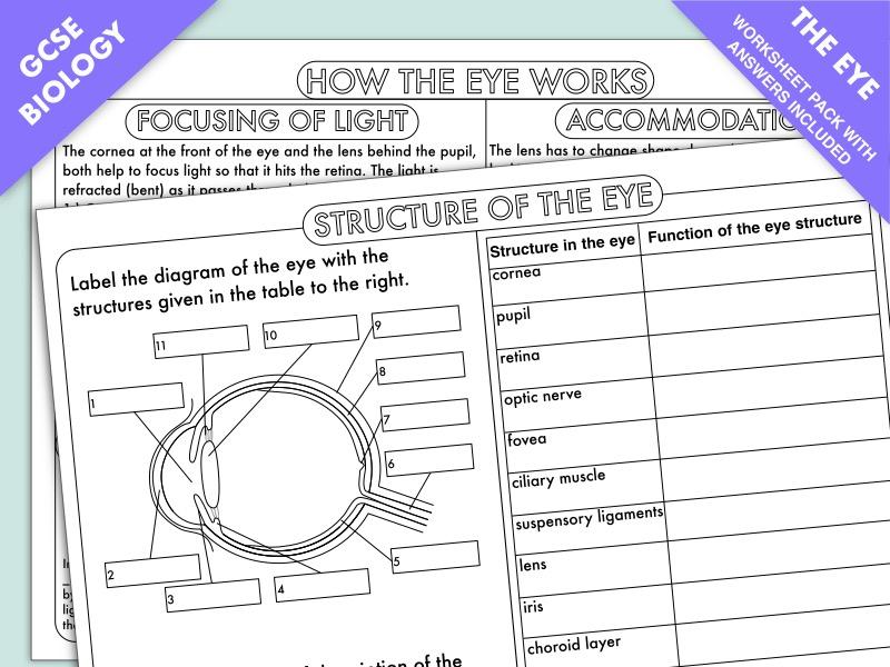 GCSE Biology: The Eye