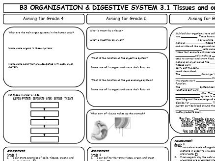 AQA GCSE 9-1 Biology B3 Revision Sheets (differentiated)