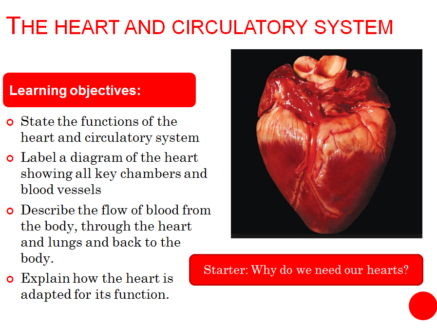 Heart Structure Functions And Adapations New Aqa Spec By Jubblord