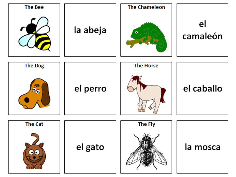 Animals: Spanish Vocabulary Card Sort