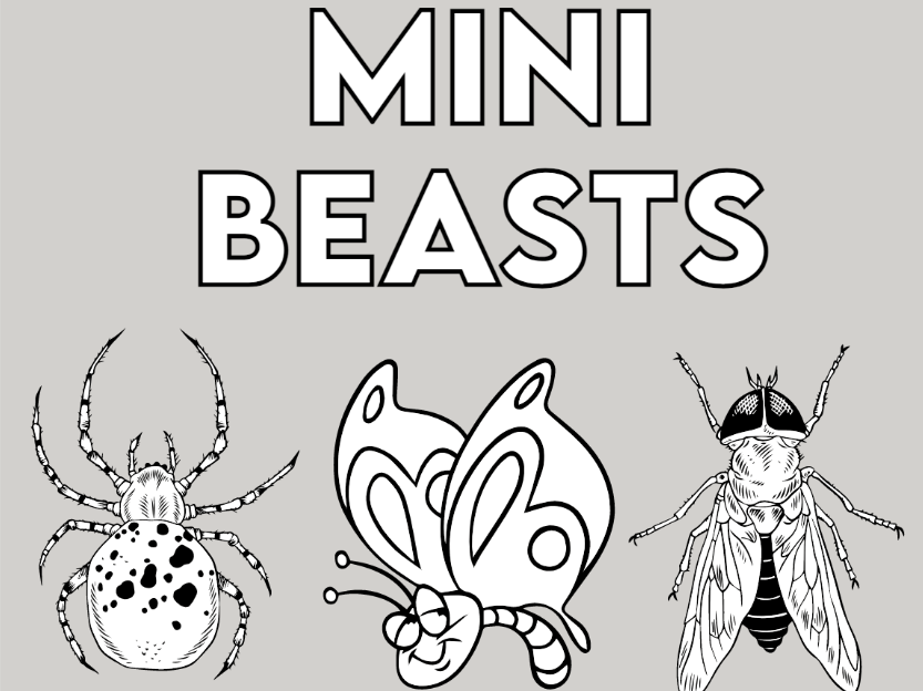 Counting Mini beasts to 12