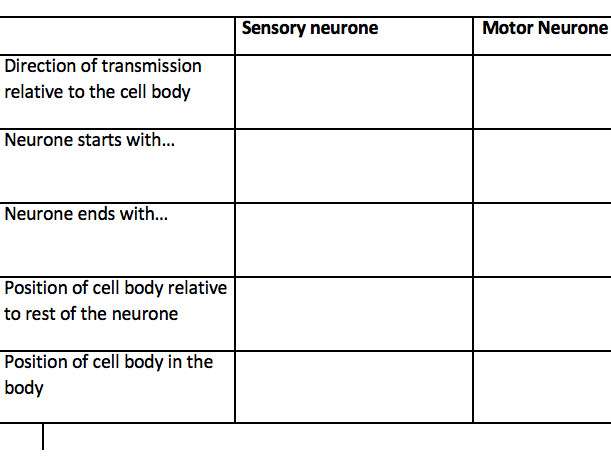 AQA Biology neurones table worksheet