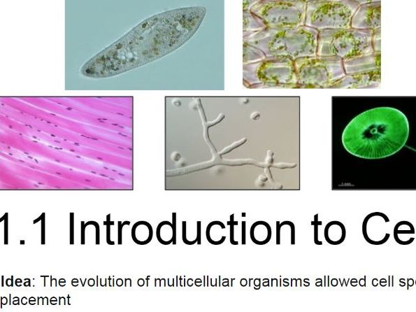 IB Biology - 1. Cell Biology - PowerPoint Presentations