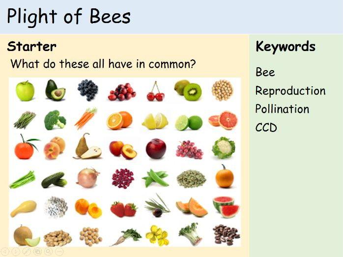 KS3 Plants - The Plight of Bees