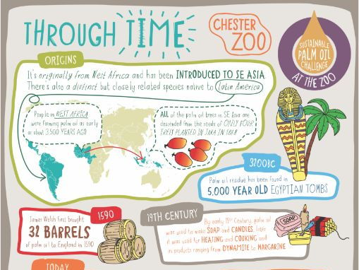 Learn at Chester Zoo - The History of Palm Oil