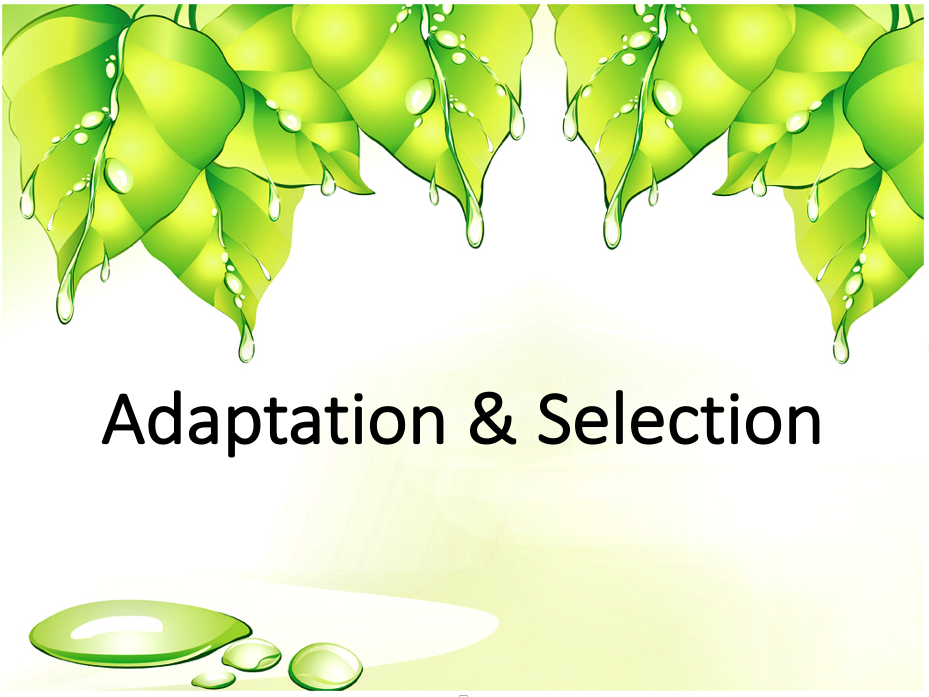 Biodiversity - Adaptation & Selection