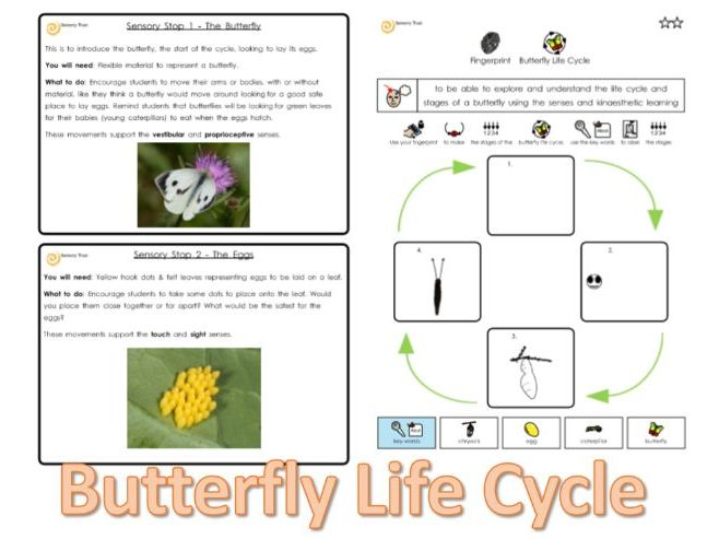Butterfly Life Cycle: Sensory Actvitity