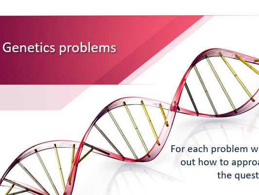 Genetics Problems PowerPoint