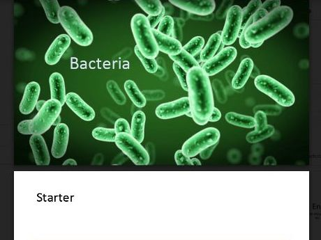 Specialized Cells (Bacteria)