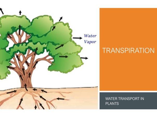 Transpiration DL