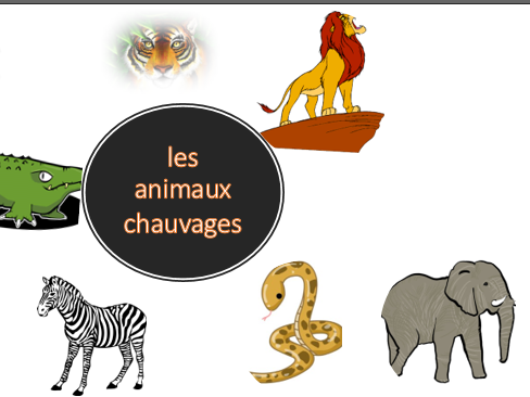 Les animaux sauvages_wild animals