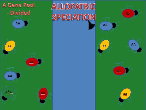 Allopatric & Sympatric Speciation