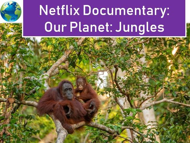 Our Planet Jungles