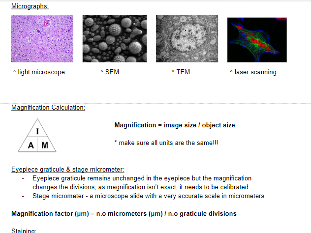 OCR A A-Level Biology: Cell Structure & Microscopy Notes