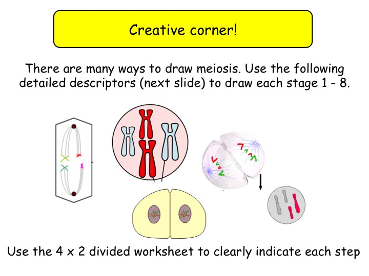 9.2 Meiosis and genetic variation NEW Year 12 Biology specification