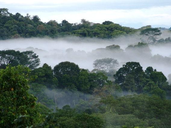 AQA The Living World - Rainforest Adaptations