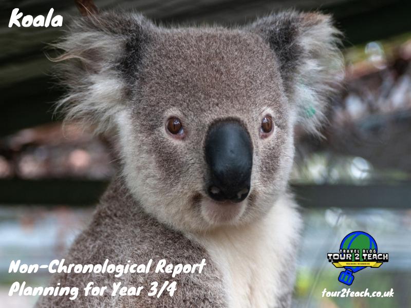 Koala: Non-Chronological Report Planning for Year 3/4