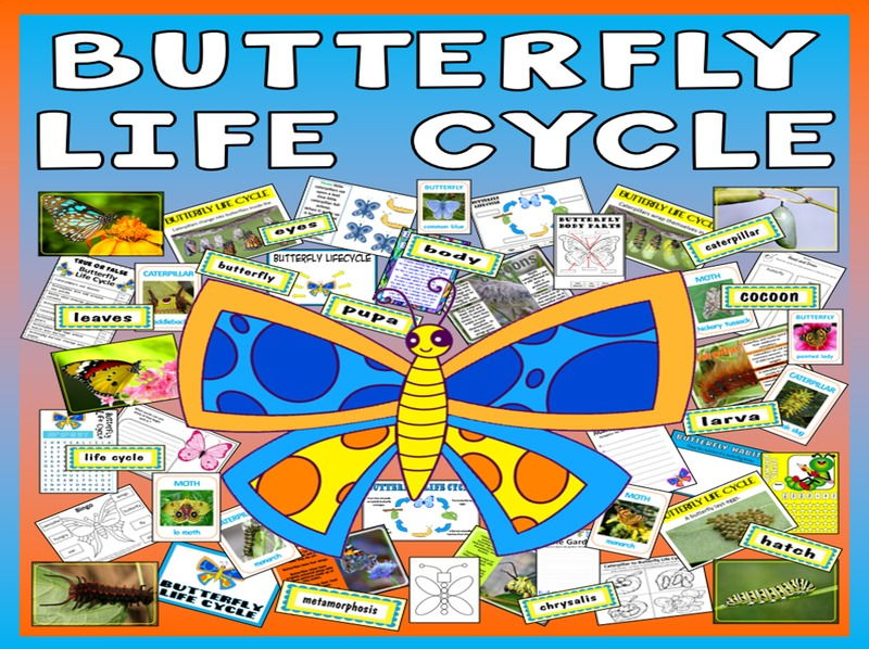 BUTTERFLY LIFE CYCLE TEACHING RESOURCES SCIENCE INSECTS MINIBEAST CATERPILLAR