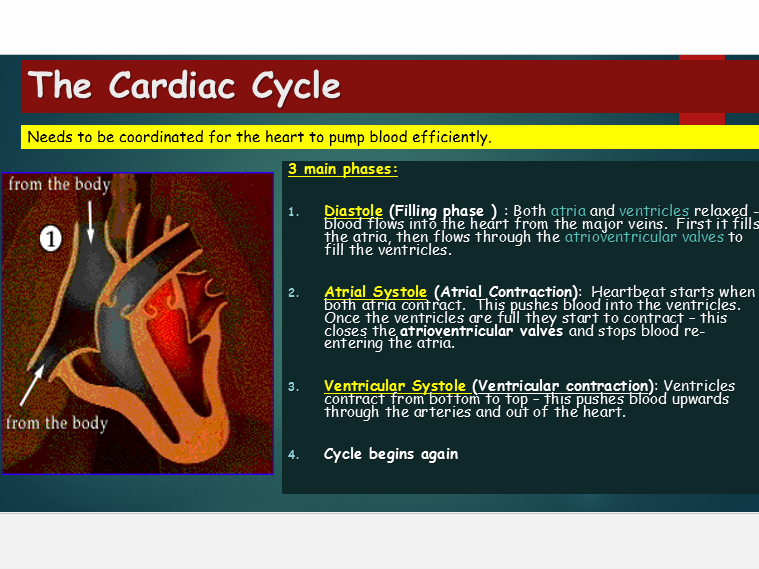OCR A Level Biology (H020) Module 3 - Cardiac cycle
