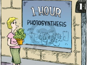 KS3_Photosynthesis_investigating the mechanism, adaptations and importance