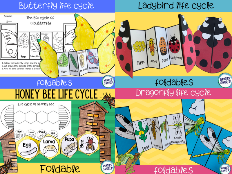 Insect life cycles foldables bundle