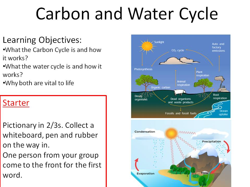 Carbon and Water Cycle New GCSE Bio 9-1