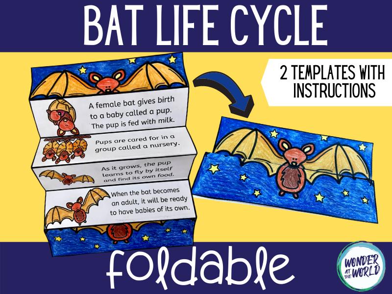 Life cycle of a bat foldable