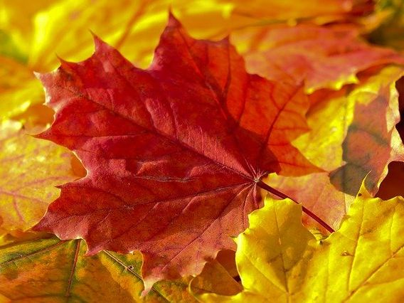 Autumn leaves can be... simple picture poem