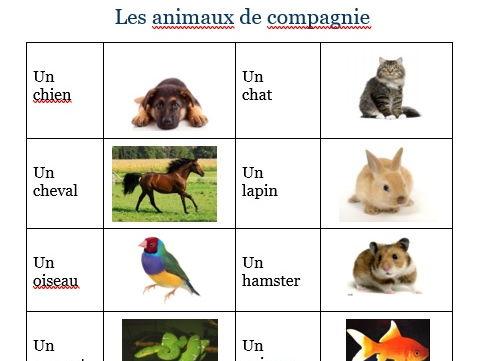 Exercise sheet - Pets - Les animaux de compagnie