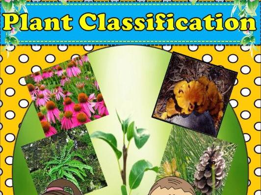 Plant Classification - Kingdom Plantae - Unit Plan With Worksheets