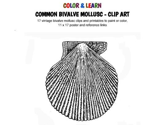 C O L O R & L E A R N - Common Marine Bivalve Molluscs - Clip Art