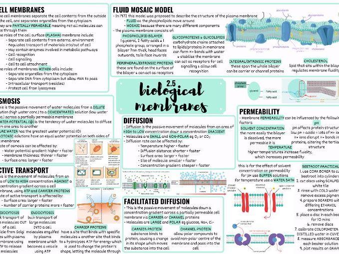 OCR ALEVEL BIOLOGY BIOLOGICAL MEMBRANES MINDMAP