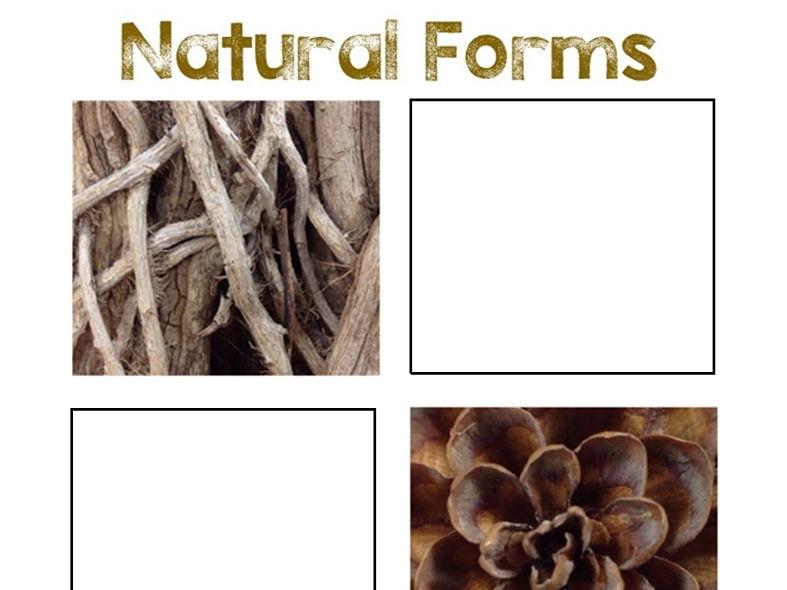 Natural Forms Worksheet #3