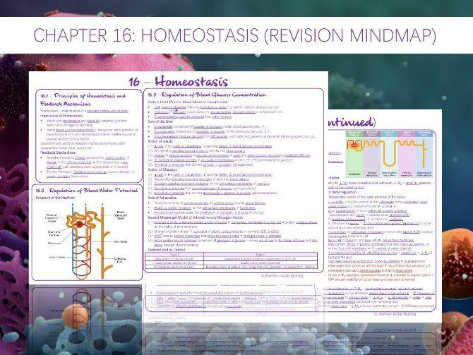 AQA A-Level - Biology : 16 - Homeostasis (Revision Mindmap)