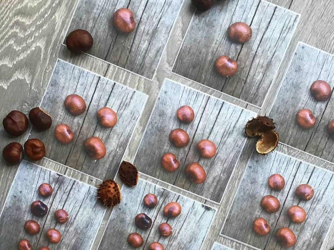 Conker counting images to download-subitise with Autumn!