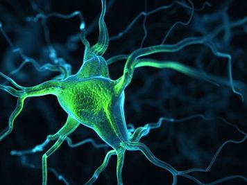 Neurone physiology Edexcel A/B