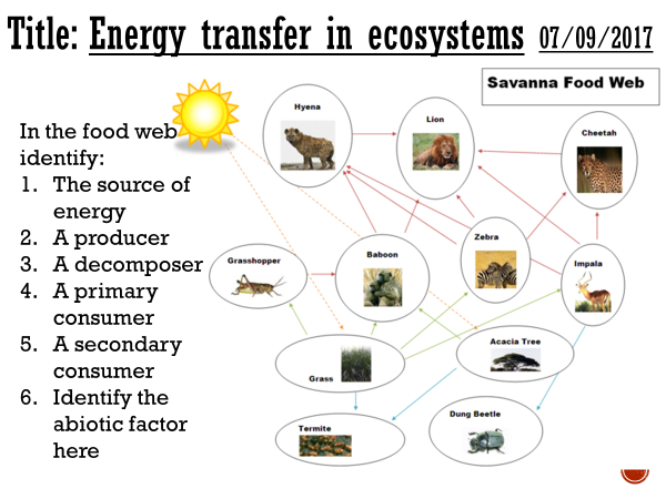 Energy transfer in ecosystems - complete lesson (A2)