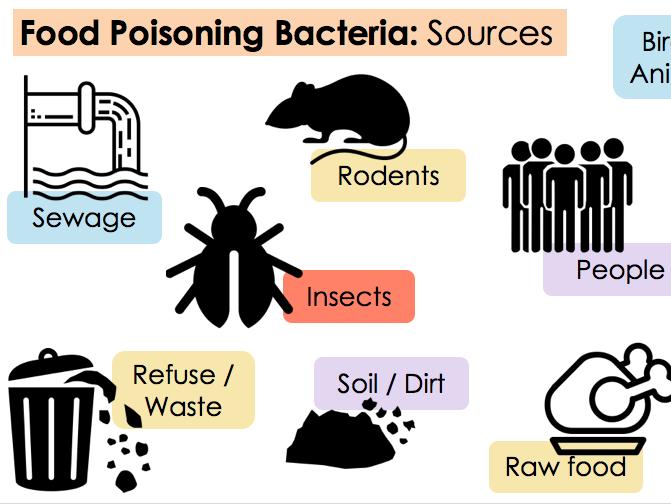 KS4 WJEC Hospitality Unit 01 LO4 - Common Food Poisoning & Bacteria
