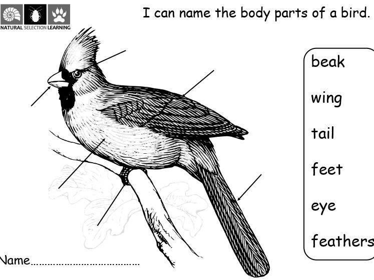 label the body parts of a bird worksheet ks1 by gdwaters1
