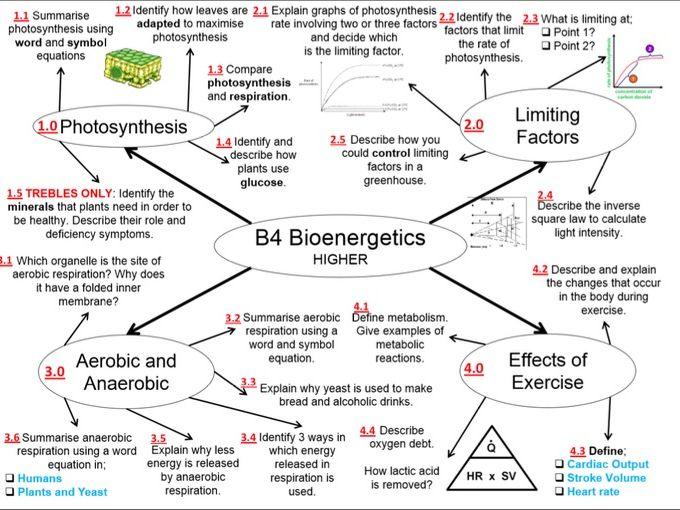 B4 - GCSE AQA Biology Revision HIGHER
