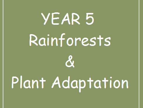 Rainforest and Plant Adaptation Lesson and Resources