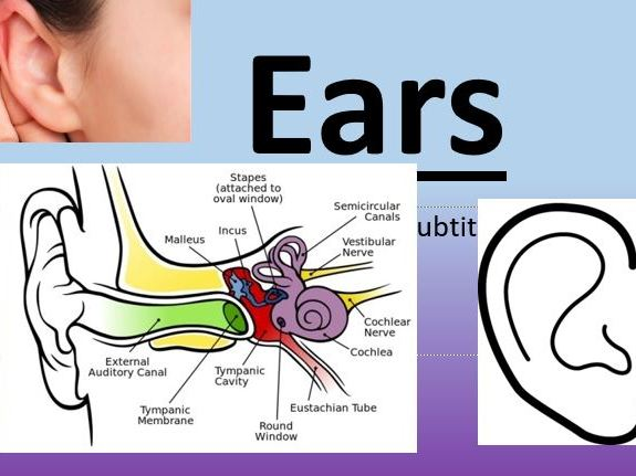 Labelling parts of the ear