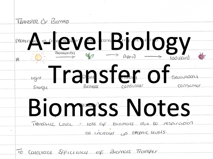 Alevel Biology A* Notes - Transfer of Biomass