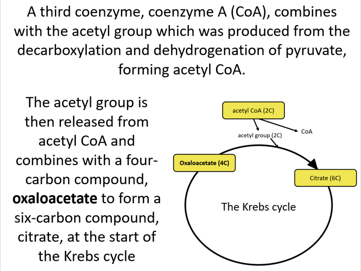 Overall reaction of aerobic respiration (Edexcel Int. A-level Biology)